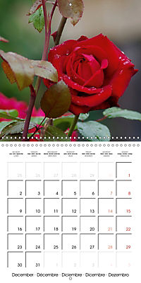 Delicate Beauties - Magnificent Roses (Wall Calendar 2019 300 × 300 mm Square) - Produktdetailbild 12