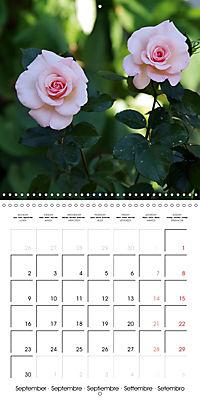 Delicate Beauties - Magnificent Roses (Wall Calendar 2019 300 × 300 mm Square) - Produktdetailbild 9