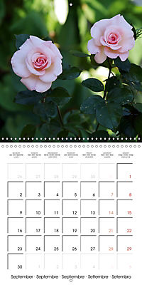 Delicate Beauties - Magnificent Roses (Wall Calendar 2019 300 × 300 mm Square) - Produktdetailbild 9