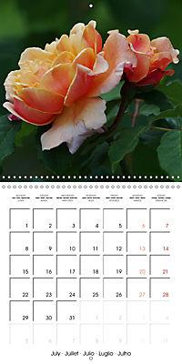 Delicate Beauties - Magnificent Roses (Wall Calendar 2019 300 × 300 mm Square) - Produktdetailbild 7