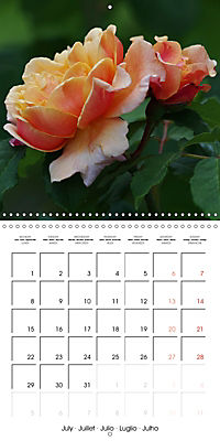 Delicate Beauties - Magnificent Roses (Wall Calendar 2019 300 × 300 mm Square) - Produktdetailbild 7