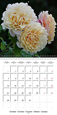 Delicate Beauties - Magnificent Roses (Wall Calendar 2019 300 × 300 mm Square) - Produktdetailbild 10