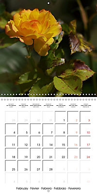 Delicate Beauties - Magnificent Roses (Wall Calendar 2019 300 × 300 mm Square) - Produktdetailbild 2