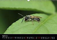 Delightful Bees (Wall Calendar 2019 DIN A3 Landscape) - Produktdetailbild 4