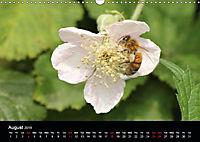 Delightful Bees (Wall Calendar 2019 DIN A3 Landscape) - Produktdetailbild 8