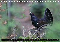 Der Auerhahn - Szenen einer Balz (Tischkalender 2019 DIN A5 quer) - Produktdetailbild 4
