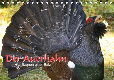 Der Auerhahn - Szenen einer Balz (Tischkalender 2019 DIN A5 quer), Hans-Werner Scheller