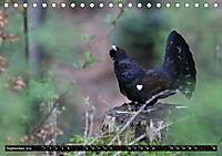 Der Auerhahn - Szenen einer Balz (Tischkalender 2019 DIN A5 quer) - Produktdetailbild 9