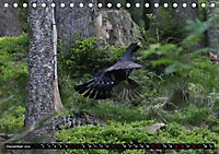 Der Auerhahn - Szenen einer Balz (Tischkalender 2019 DIN A5 quer) - Produktdetailbild 12