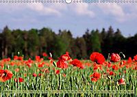 Der Augsburger Stadtwald - Ein Paradies für Naturfreunde (Wandkalender 2019 DIN A3 quer) - Produktdetailbild 6
