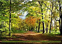 Der Augsburger Stadtwald - Ein Paradies für Naturfreunde (Wandkalender 2019 DIN A3 quer) - Produktdetailbild 10