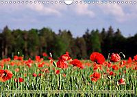 Der Augsburger Stadtwald - Ein Paradies für Naturfreunde (Wandkalender 2019 DIN A4 quer) - Produktdetailbild 6