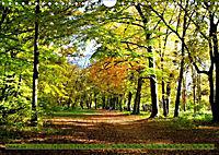 Der Augsburger Stadtwald - Ein Paradies für Naturfreunde (Wandkalender 2019 DIN A4 quer) - Produktdetailbild 10