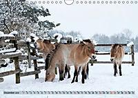 Der Augsburger Stadtwald - Ein Paradies für Naturfreunde (Wandkalender 2019 DIN A4 quer) - Produktdetailbild 12