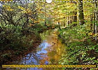 Der Augsburger Stadtwald - Ein Paradies für Naturfreunde (Wandkalender 2019 DIN A4 quer) - Produktdetailbild 11