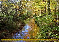 Der Augsburger Stadtwald - Ein Paradies für Naturfreunde (Wandkalender 2019 DIN A2 quer) - Produktdetailbild 11