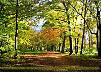 Der Augsburger Stadtwald - Ein Paradies für Naturfreunde (Wandkalender 2019 DIN A2 quer) - Produktdetailbild 10