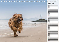 Der Briard 2019 - Ein echter Charmeur (Tischkalender 2019 DIN A5 quer) - Produktdetailbild 3
