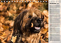 Der Briard 2019 - Ein echter Charmeur (Tischkalender 2019 DIN A5 quer) - Produktdetailbild 11