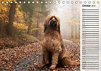 Der Briard 2019 - Ein echter Charmeur (Tischkalender 2019 DIN A5 quer) - Produktdetailbild 10
