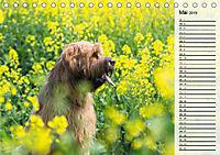 Der Briard 2019 - Ein echter Charmeur (Tischkalender 2019 DIN A5 quer) - Produktdetailbild 5