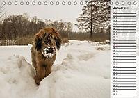 Der Briard 2019 - Ein echter Charmeur (Tischkalender 2019 DIN A5 quer) - Produktdetailbild 1