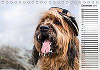 Der Briard 2019 - Ein echter Charmeur (Tischkalender 2019 DIN A5 quer) - Produktdetailbild 12