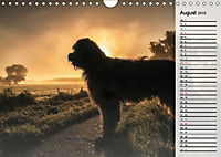 Der Briard 2019 - Ein echter Charmeur (Wandkalender 2019 DIN A4 quer) - Produktdetailbild 8