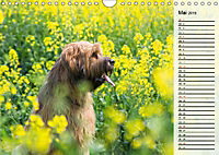 Der Briard 2019 - Ein echter Charmeur (Wandkalender 2019 DIN A4 quer) - Produktdetailbild 5