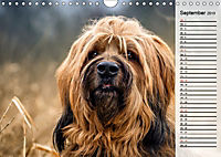 Der Briard 2019 - Ein echter Charmeur (Wandkalender 2019 DIN A4 quer) - Produktdetailbild 9