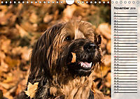 Der Briard 2019 - Ein echter Charmeur (Wandkalender 2019 DIN A4 quer) - Produktdetailbild 11