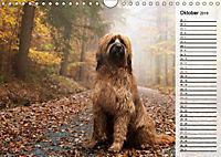 Der Briard 2019 - Ein echter Charmeur (Wandkalender 2019 DIN A4 quer) - Produktdetailbild 10