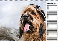 Der Briard 2019 - Ein echter Charmeur (Wandkalender 2019 DIN A3 quer) - Produktdetailbild 12