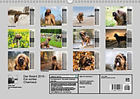 Der Briard 2019 - Ein echter Charmeur (Wandkalender 2019 DIN A3 quer) - Produktdetailbild 13