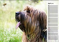 Der Briard 2019 - Ein echter Charmeur (Wandkalender 2019 DIN A2 quer) - Produktdetailbild 4