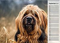 Der Briard 2019 - Ein echter Charmeur (Wandkalender 2019 DIN A2 quer) - Produktdetailbild 9
