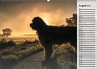 Der Briard 2019 - Ein echter Charmeur (Wandkalender 2019 DIN A2 quer) - Produktdetailbild 8