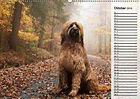 Der Briard 2019 - Ein echter Charmeur (Wandkalender 2019 DIN A2 quer) - Produktdetailbild 10