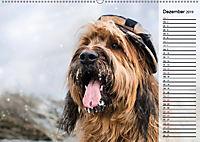 Der Briard 2019 - Ein echter Charmeur (Wandkalender 2019 DIN A2 quer) - Produktdetailbild 12