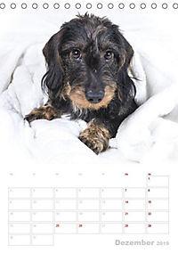 Der Dackel (M)ein treuer Weggefährte (Tischkalender 2019 DIN A5 hoch) - Produktdetailbild 5