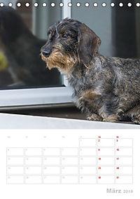 Der Dackel (M)ein treuer Weggefährte (Tischkalender 2019 DIN A5 hoch) - Produktdetailbild 3