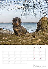 Der Dackel (M)ein treuer Weggefährte (Tischkalender 2019 DIN A5 hoch) - Produktdetailbild 2