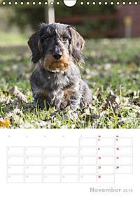Der Dackel (M)ein treuer Weggefährte (Wandkalender 2019 DIN A4 hoch) - Produktdetailbild 11