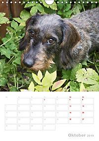Der Dackel (M)ein treuer Weggefährte (Wandkalender 2019 DIN A4 hoch) - Produktdetailbild 10