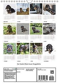 Der Dackel (M)ein treuer Weggefährte (Wandkalender 2019 DIN A4 hoch) - Produktdetailbild 13
