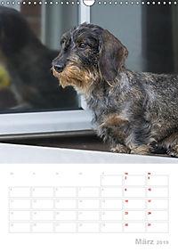 Der Dackel (M)ein treuer Weggefährte (Wandkalender 2019 DIN A3 hoch) - Produktdetailbild 3