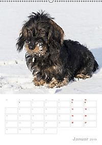 Der Dackel (M)ein treuer Weggefährte (Wandkalender 2019 DIN A2 hoch) - Produktdetailbild 1