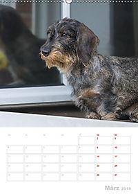 Der Dackel (M)ein treuer Weggefährte (Wandkalender 2019 DIN A2 hoch) - Produktdetailbild 3