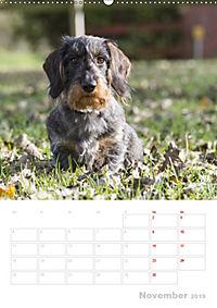 Der Dackel (M)ein treuer Weggefährte (Wandkalender 2019 DIN A2 hoch) - Produktdetailbild 11