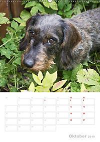 Der Dackel (M)ein treuer Weggefährte (Wandkalender 2019 DIN A2 hoch) - Produktdetailbild 10